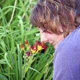 An image of ladybug2003