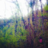 An image of badger_grl