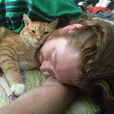 An image of Ginger_Tiger